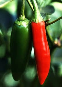 chiles.jpg (29790 octets)